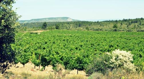 Wine Passport - Corbières-route-des-vins-Languedoc