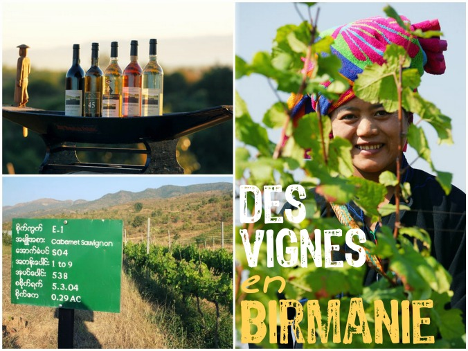 wine-trotter-vigne-birmanie