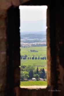 Vue sur les vignes de Châteauneuf-du-Pape
